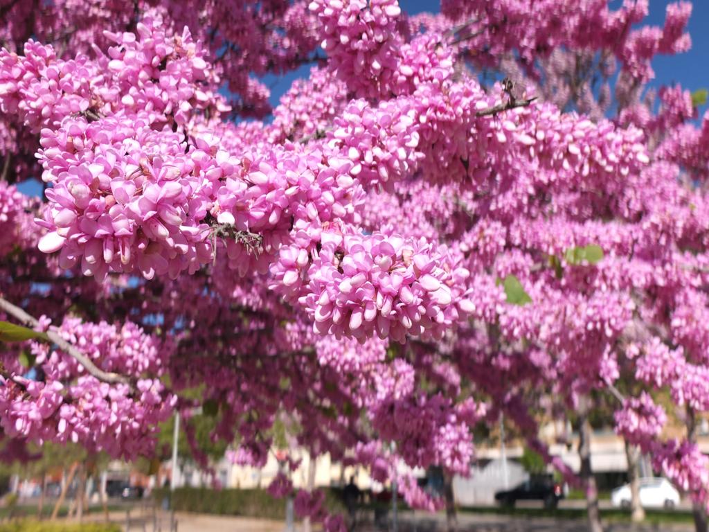 L'arbre de l'amor